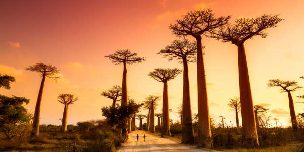 14-Day Luxury Cruise of Madagascar, Réunion & Mauritius