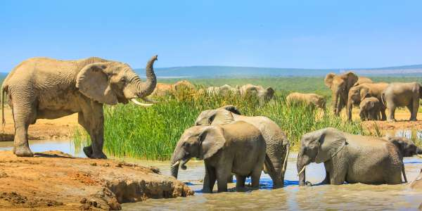 9-Day African River Cruise & Safari Adventure w/ Air
